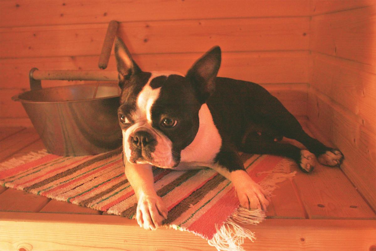 iiris ih the sauna